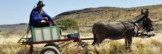 Afrikas Landwirtschaft muss die Fehler Europas überspringen